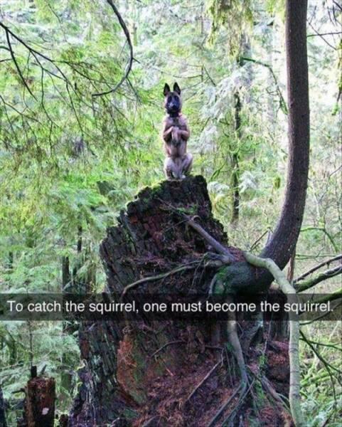 Foto graciosa de perro en el bosque