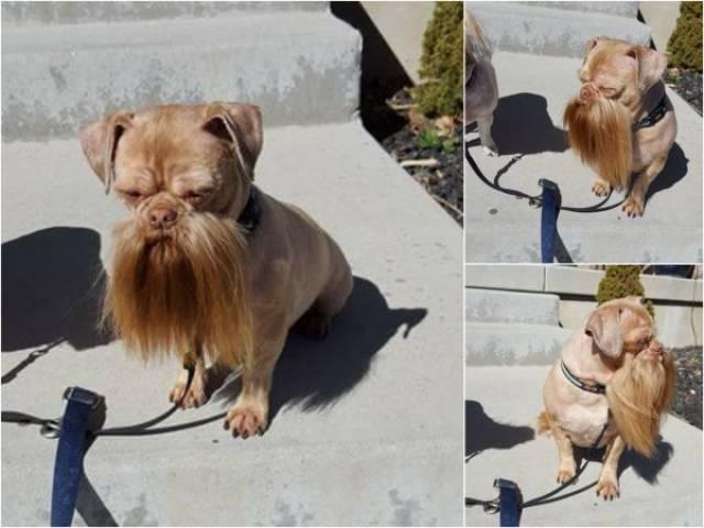 Foto graciosa de perro con barba