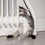 15 Fotos que demuestran que a los gatos realmente les gusta el calor