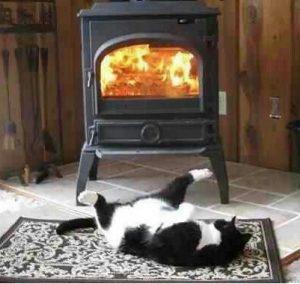 Gato al lado de la chimenea