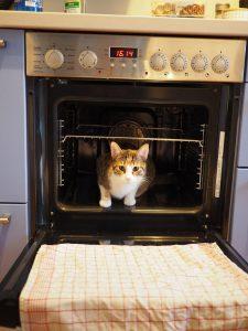 Gato dentro del horno 2