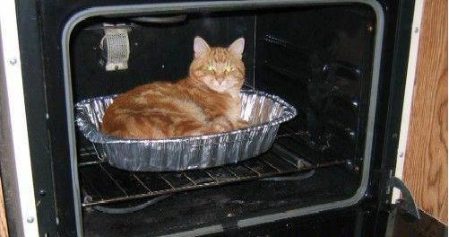 Gato dentro del horno 4