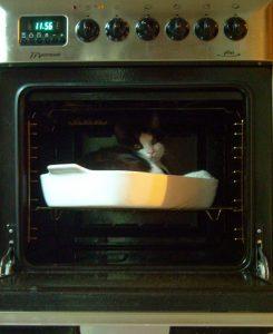 Gato dentro del horno 3
