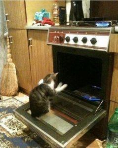 Gato dentro del horno