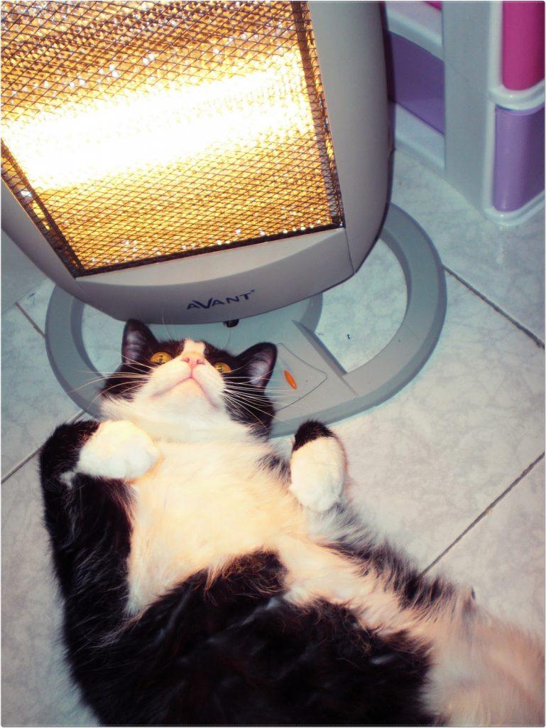 Gato al lado de la estufa 2