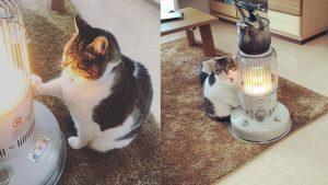 Gato al lado de la estufa