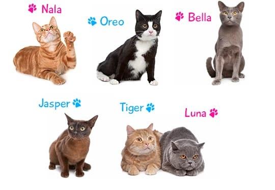 Nombres para gatos y gatas y su significado