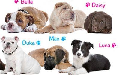 200 nombres para perros y perras
