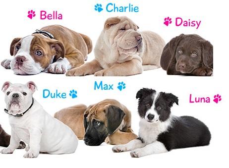 Nombres perros y perras