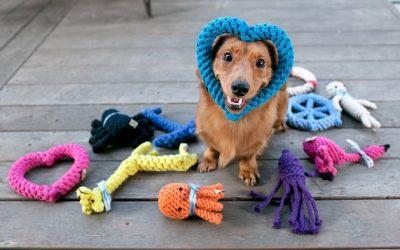 Los mejores vídeos de perros jugando con juguetes
