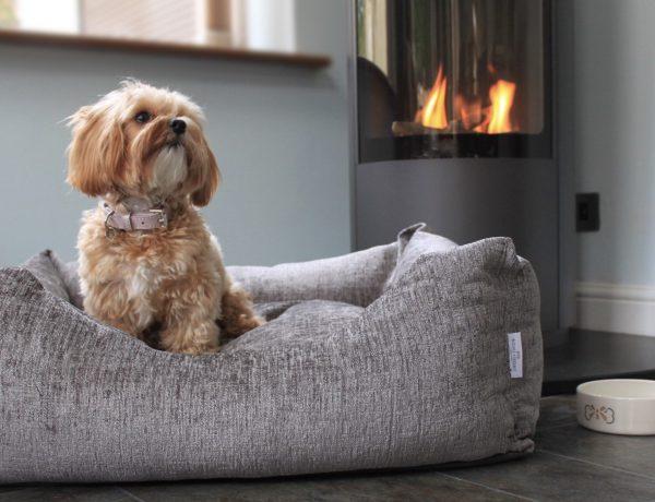 Accesorios cuidado perro casa