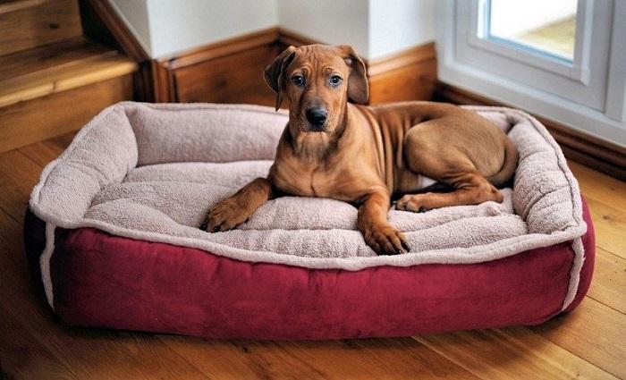 Cama cómoda perro