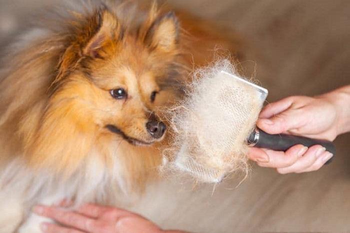 Cepillos perros