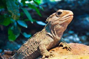 Animales que viven más que los humanos7