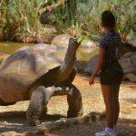 10 Animales que Viven Mucho Más Tiempo que los Humanos