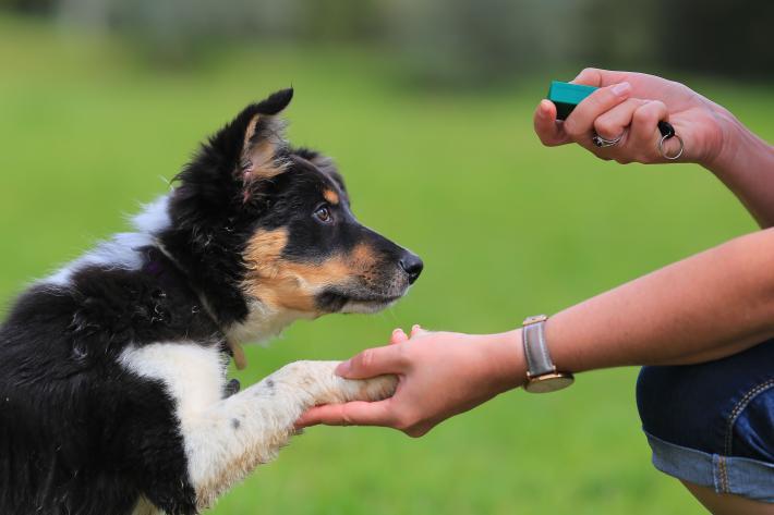 Qué elementos usar para adiestrar a perros?