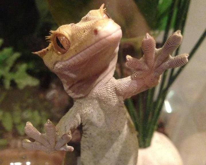 Los mejores reptiles para tener en casa como mascota