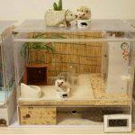 Cómo cuidar a un erizo en casa: el hábitat perfecto para ellos