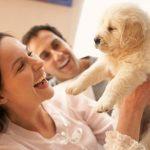Consejos para antes de adoptar a un perro