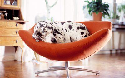 Consejos para vivir con perros grandes en pisos pequeños