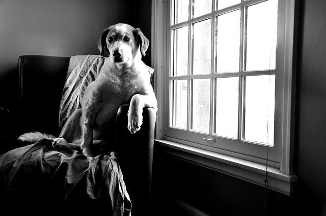 Perro grande en apartamento pequeño