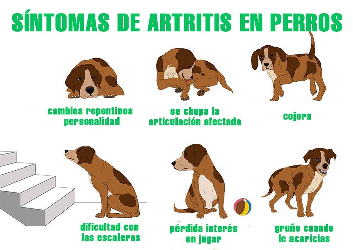 Joint pain symptoms in dogs