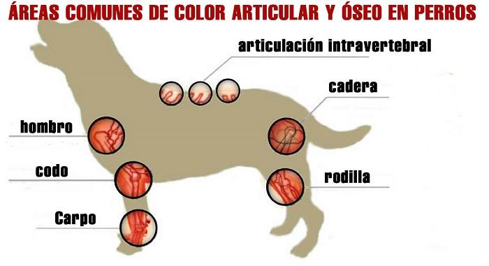 Problemas articulares en perros