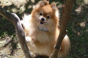 Collar GPS para perro