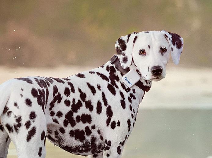 Collar GPS para perro 2