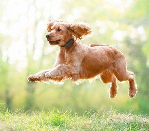 Collar GPS para perro 3