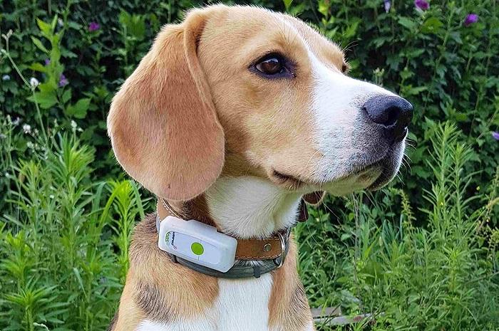Collar GPS para perro 4