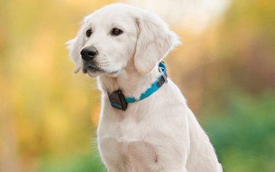 Por qué ponerle un collar GPS a tu perro