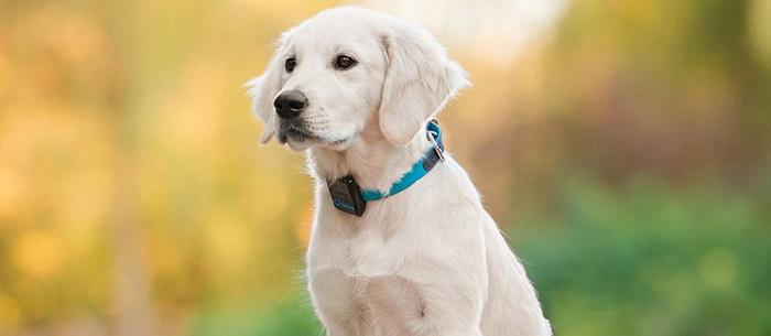 Collar GPS para perro 5