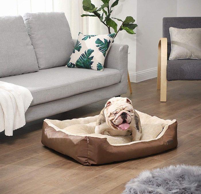Consejos para elegir una cama para perros