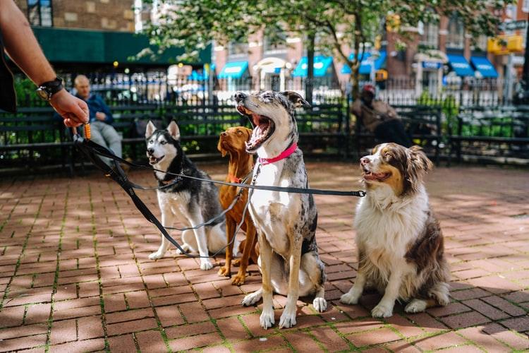 Qué problemas se tratan en un curso de adiestramiento canino?