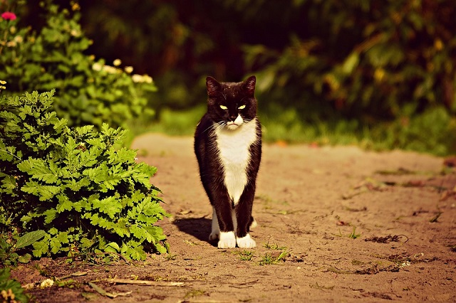 Gato mirando desde lejos