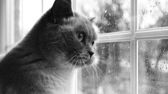 Gato solitario