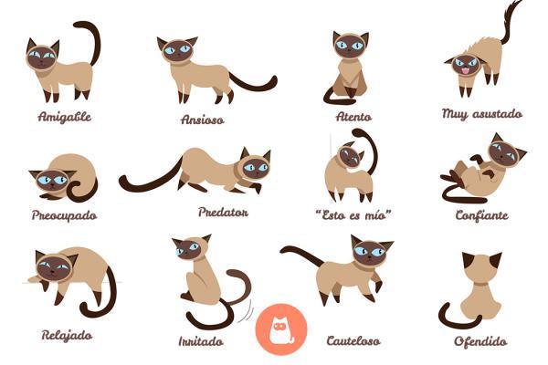 Lenguaje corporal de gatos
