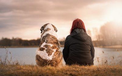 ¿Viajas con tu mascota? Consejos para una alimentación de 10