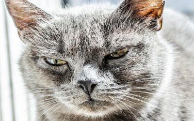 ¿Son los gatos ariscos o no?