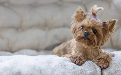 Las mejores razas de perros para vivir en pisos