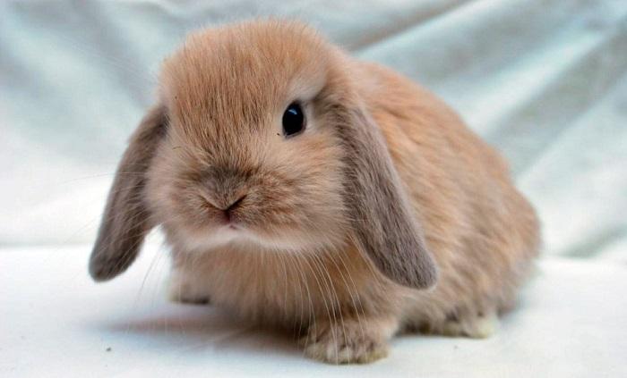 Cómo cuidar a tu mascota conejo enano en verano