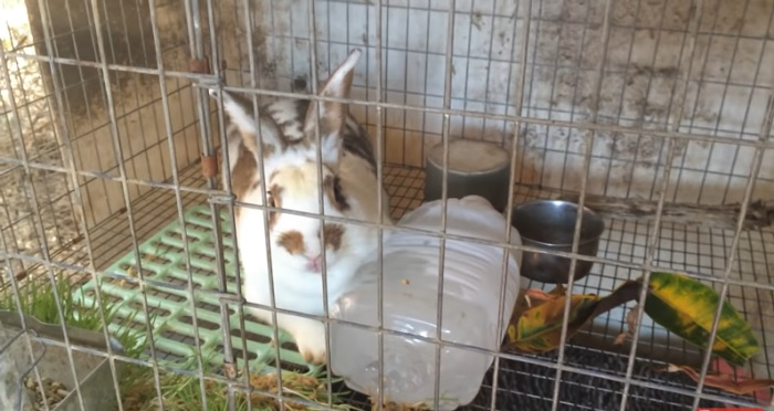 Botella congelada en la jaula de un conejo