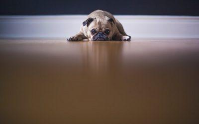 Consejos para un hogar con perros