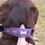 Cómo elegir y ajustar correctamente el collar en los perros