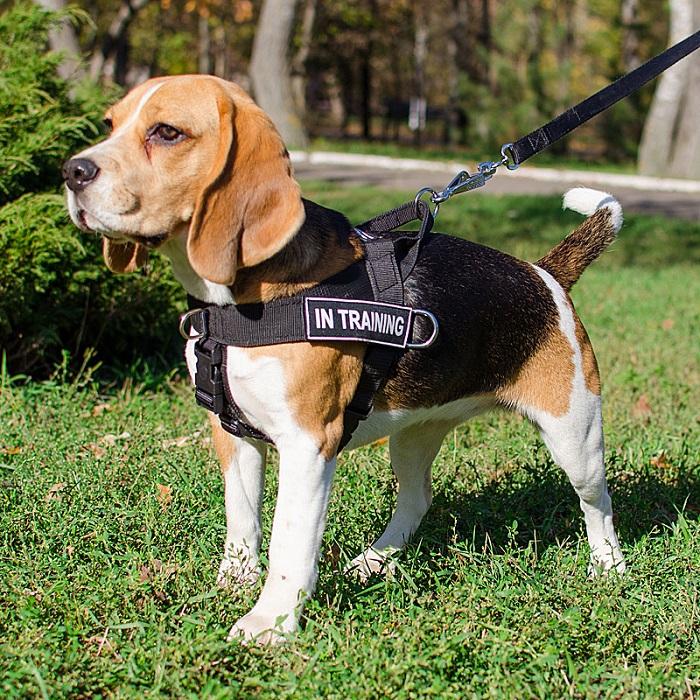 Correa para pasear a un perro