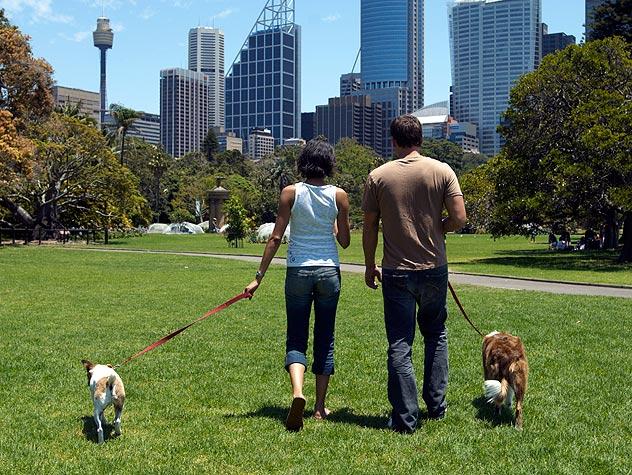 Consejos para pasear a un perro en el parque