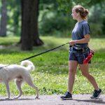 Trucos y Consejos para Pasear a un Perro