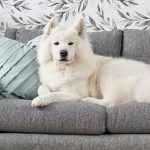 Ventajas de un sofá antimanchas y antiarañazos si tienes mascotas