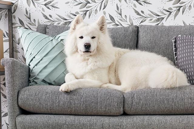 Perro en un sofá antimanchas 2